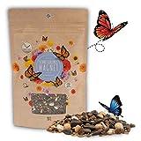 100g Schmetterlingswiese Samen für eine bunte Blumenwiese - Farbenfrohe & nektarreiche...