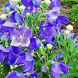 B/H Blumensamen winterhart mehrjährig,Samen saatgut winterhart mehrjährig,500 g...