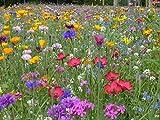 Blumenwiese mit 65 Wildkräuterarten, fünfjährige Bienenweide, insektenfreundliche...